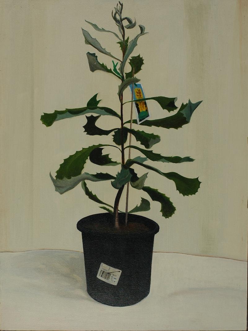 Andrew Sayers Banksia