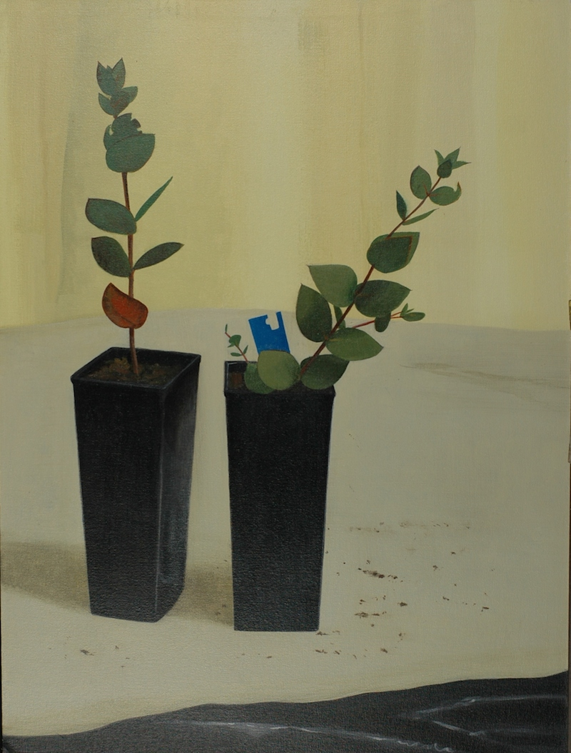 Andrew Sayers Two Plants