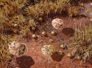 MIKE GREEN - Lovenia Woodsii and Paddy Melons - 30.5 x 40.6cm